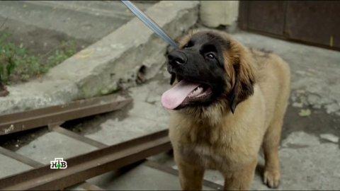 Инспектор Купер 2 сезон 8 серия, кадр 9