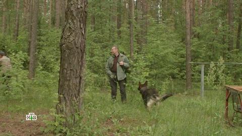 Лесник 4 сезон 50 серия, кадр 5